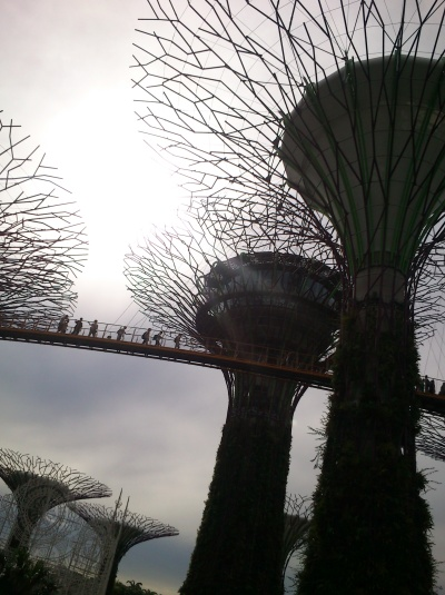 supertree grove